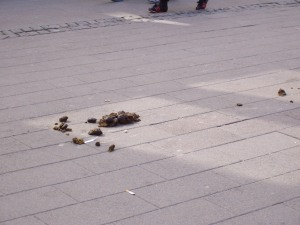 Creature-shit. In the middle of the busiest street in Copenhagen. What century is this again?