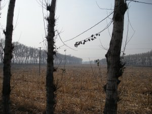 And gaped at the weird, smokey Chinese landscape