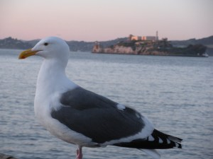 If it's on a smaller body of water, is it called a bay-gull?