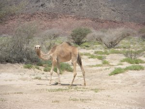 After the canyon, we headed to the desert. The scenery was occasionally four-legged.